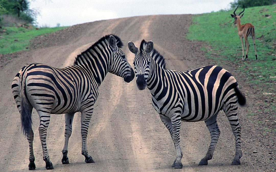 Investec gets two heads